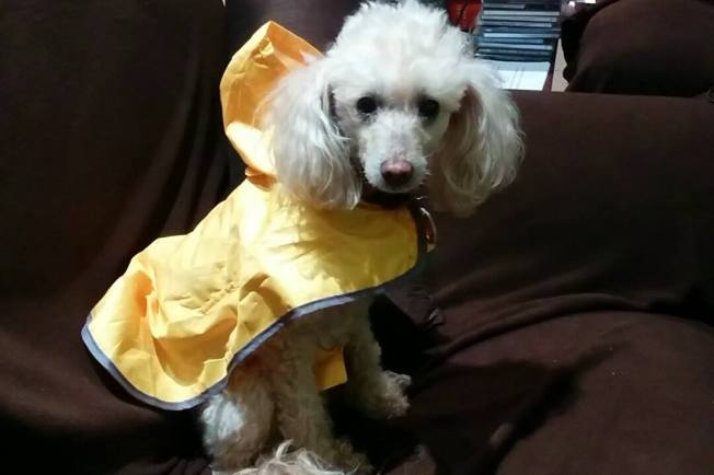 Taffy in raincoat Dec 2014